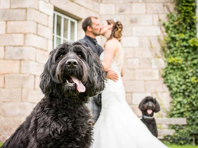 Dog friendly wedding venue